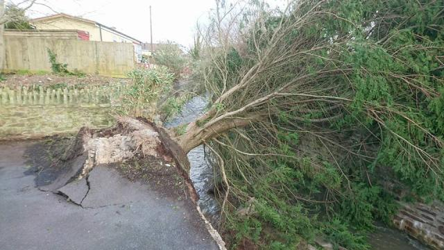 Take care folks if you're walking behind the old Penmare , tree down knocking the retaining wall into the river. The correct people have been notified to make safe, but it may take a while, as other more serious damage is taking priority.
